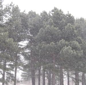 2015 Feb 15 Snow 025