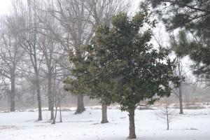 2015 Feb 15 Snow 032